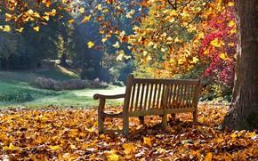 Картинка фото, Природа, Осень, Скамейка, Листья, Парк