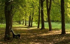 Картинка парк, аллея, скамья, солнечный свет