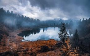Картинка лес, природа, туман, озеро