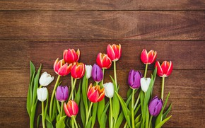 Картинка цветы, colorful, тюльпаны, red, white, fresh, wood, flowers, tulips, spring, purple, multicolored