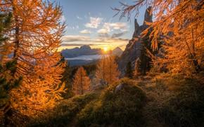 Картинка осень, солнце, лучи, деревья, закат, горы, природа, высота, Италия, Andrew Bazanov