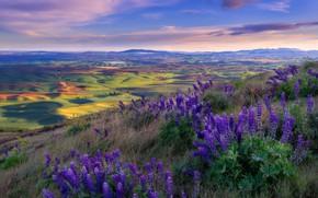 Картинка поле, цветы, вид, поля, деревня, холм, луга, сиреневые, люпины