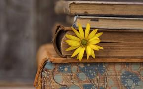 Обои цветок, фон, книги