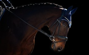 Картинка фон, конь, спорт