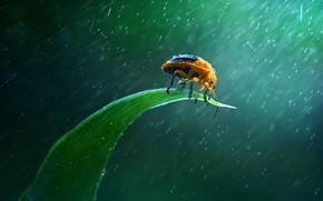 Картинка rain, insect, green leaf