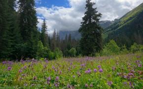 Картинка небо, трава, облака, пейзаж, цветы, горы, природа, поляна, ели, склон, ущелье, леса, Кавказ, КЧР, Гоначхир