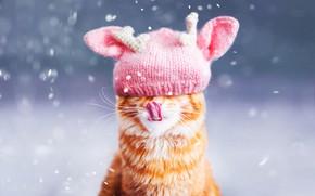 Картинка зима, язык, кошка, кот, морда, снег, фон, розовая, шапка, портрет, рыжий, снегопад, ушки, шапочка, боке, …