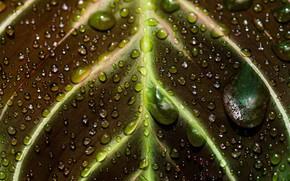 Картинка вода, капли, макро, листок, жилки