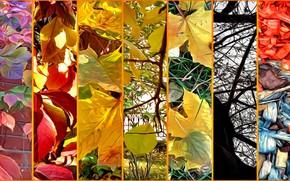 Картинка осень, листья, деревья, ветки, природа, рендеринг, коллаж, опилки на газоне