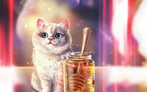 Картинка глаза, морда, котенок, мед