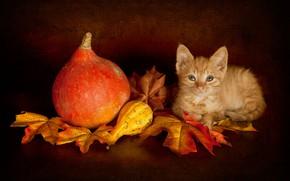 Картинка осень, кошка, взгляд, листья, поза, темный фон, котенок, урожай, малыш, рыжий, мордочка, тыквы, лежит, тыква, ...
