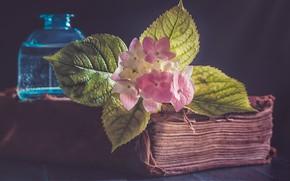 Обои цветок, фон, книга