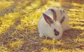 Картинка Кролик, малыш, салома