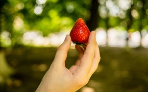 Картинка лето, рука, клубника, ягода