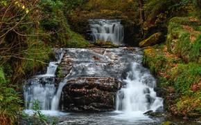 Картинка осень, лес, листья, деревья, ручей, камни, водопад, мох