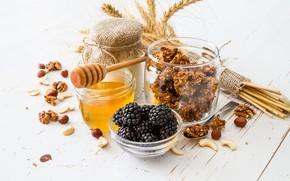 Картинка мед, орехи, ежевика, йогурт, гранола, Naumenko Oleksandra