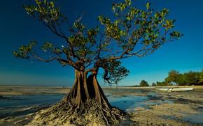 Картинка дерево, лодка, отлив, Индонезия, Walakiri Beach