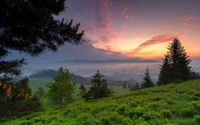 Картинка трава, деревья, пейзаж, закат, ветки, природа, холмы, склон, Польша, сумерки, леса