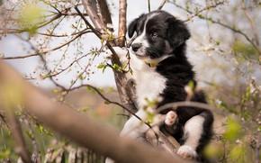 Картинка взгляд, цветы, ветки, поза, дерево, черно-белый, собака, весна, сад, малыш, милый, щенок, ствол, мордашка, цветение, …