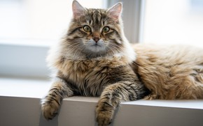 Картинка кот, взгляд, окно