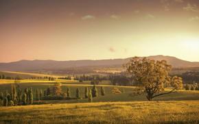 Картинка поле, осень, природа