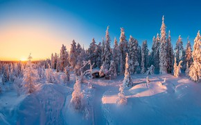 Картинка зима, лес, снег, голубое небо