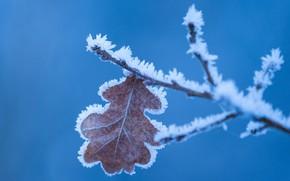 Картинка зима, иней, макро, природа, лист, фон, ветка