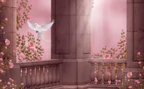 Картинка цветы, нежность, голубь