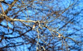 Картинка небо, птицы, дерево