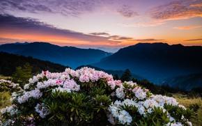 Картинка лес, небо, листья, облака, пейзаж, закат, цветы, горы, природа, туман, холмы, склоны, вершины, куст, красота, …