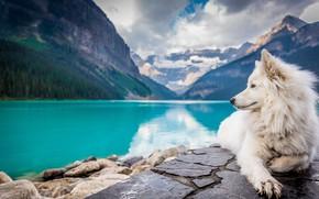 Картинка озеро, гора, собака, white, landscape, dog, mountains, lake, looking