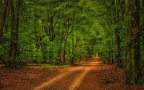 Картинка дорога, зелень, лес