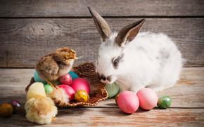 Картинка цыплята, яйца, кролик, Пасха
