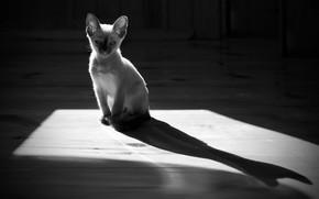 Картинка свет, тень, котёнок