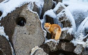 Картинка зима, снег, камни, лиса, бетон, отверстие