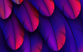 Картинка colorful, feather, abstract 3D