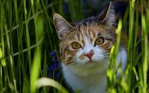 Картинка кошка, трава, взгляд, морда, свет, природа, поза, портрет, боке, пятнистая, пестрая