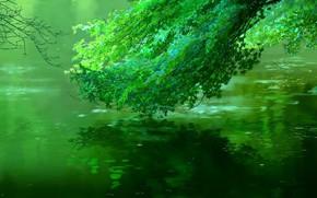 Картинка Отражение, Дерево, Река, Листва