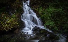 Картинка лес, листья, водопад, поток