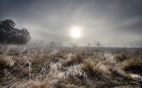 Картинка иней, трава, туман
