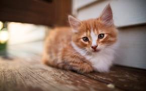 Картинка кошка, взгляд, поза, котенок, фон, стена, доски, размытие, пушистый, рыжий, мордочка, лежит, котёнок