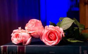 Картинка цветы, синий, фон, розы, букет, книга, розовые, бутоны, лососевые