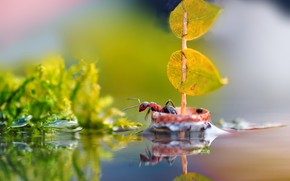 Картинка фотошоп, фэнтези, муравей, мореплаватель