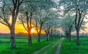 Картинка дорога, закат, весна, Германия, цветение, под Берлином