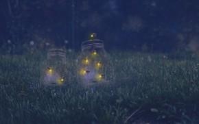 Картинка ночь, природа, светлячки, банки