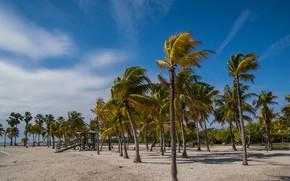 Картинка Пляж, Тропики, Пальмы