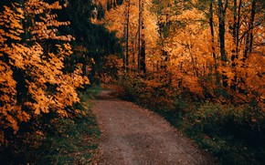 Картинка дорога, осень, лес, деревья, пейзаж, природа