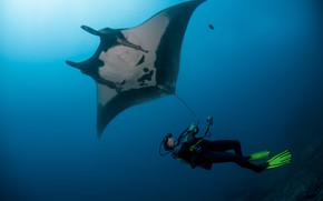 Картинка stingray, diver, underwater view