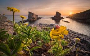 Картинка море, солнце, лучи, пейзаж, закат, цветы, природа, камни, скалы, берег, божья коровка, жук, весна, Болгария, …
