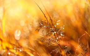 Картинка трава, солнце, блики, боке